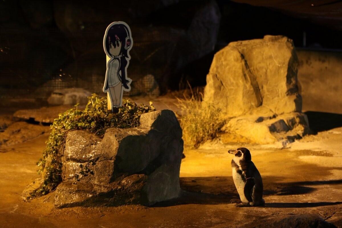 «Покойся с миром, Грейп-кун»: умер пингвин, влюблённый в фигуру девушки-аниме