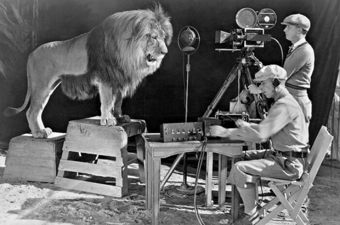 Запись того самого льва для  «Metro-Goldwyn-Mayer»