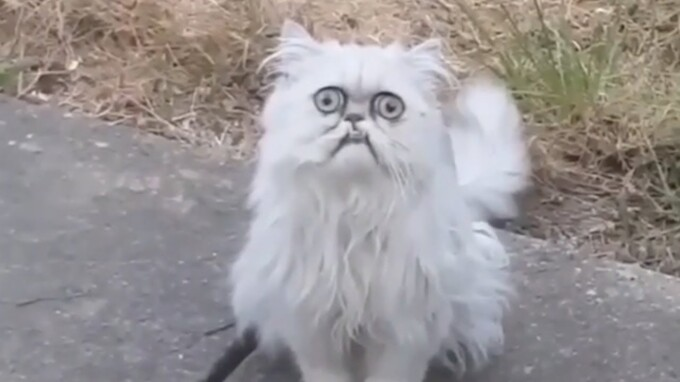 Instagram забанил вирусное видео с котом за Cat-Shaming