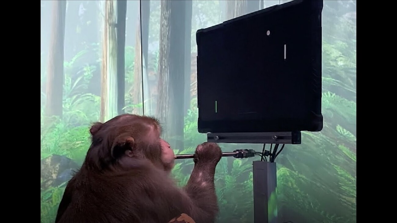 Скоро на Twitch и Discord: Neuralink Илона Маска показала обезьяну, играющую в видеоигру силой мысли