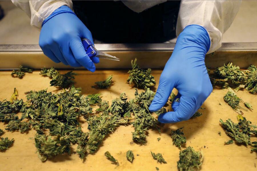 Торговлю марихуаной через интернет питательный раствор для конопли гидропоника