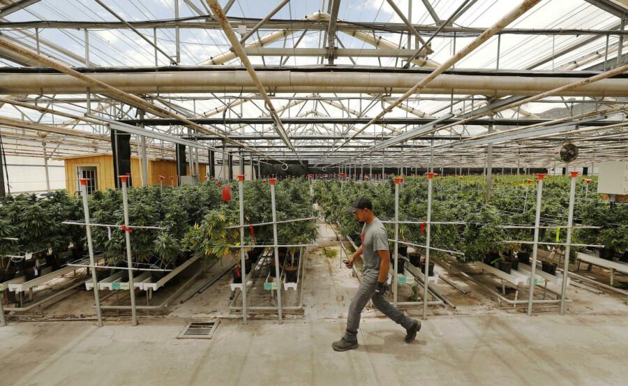 Работа в калифорнии марихуану картинки на рабочий стол марихуана