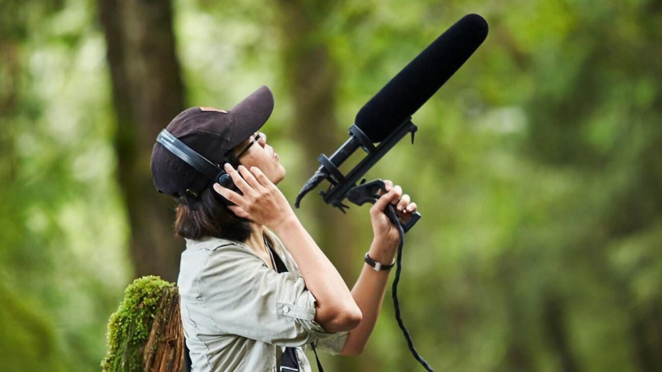 Из-за шума животные уходят из городов и лесов, а у людей он вызывает стресс: как исследователи борются за тишину