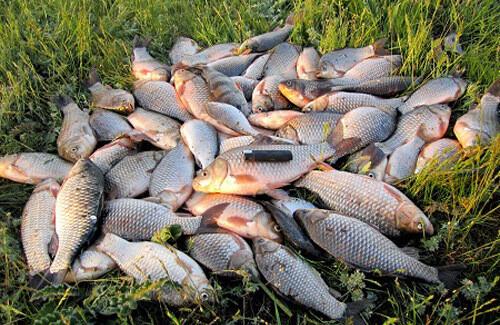 Браконьеры из города Москва выловили рыбу на запрещенную приманку