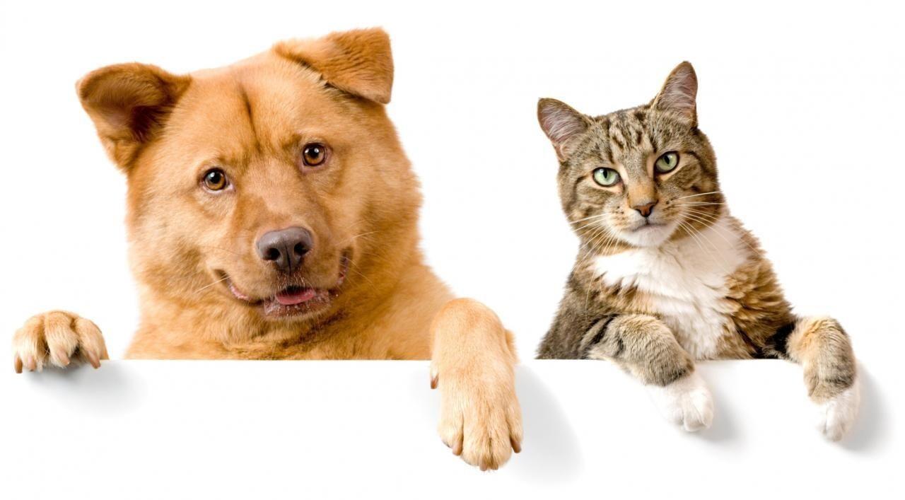 В США запретили употреблять в пищу кошек и собак