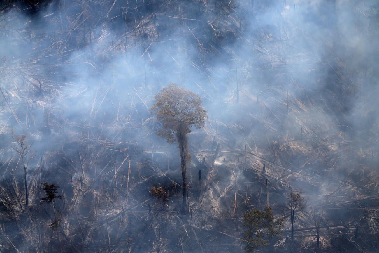Исследование: За последние 17 лет две трети тропических лесов в мире уничтожены или пришли в упадок