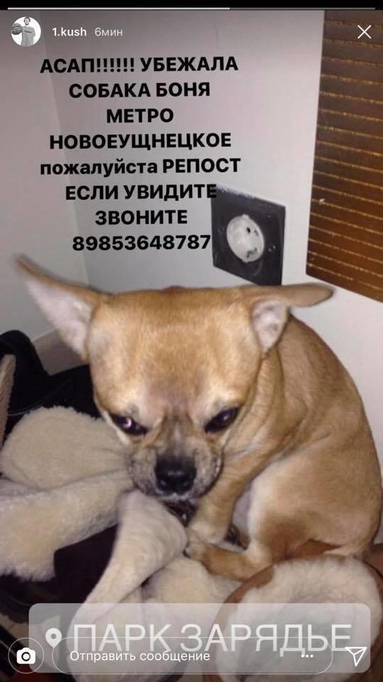 Как найти собаку в Москве, если у вас есть «Гелендваген»