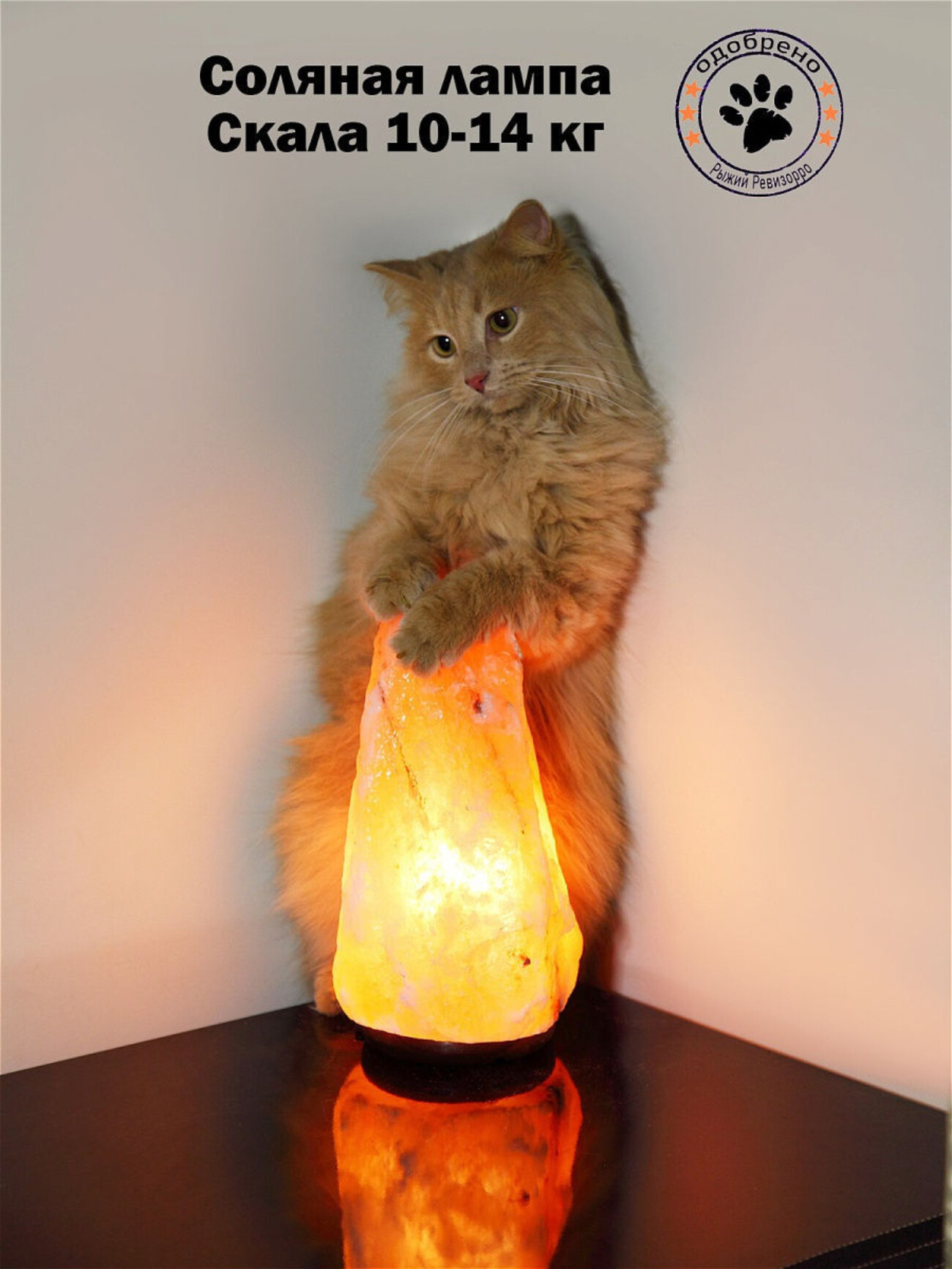 «Абсолютное читерство»: магазин солей и ламп заснял кота с товаром, чтобы быть заметнее на маркетплейсе