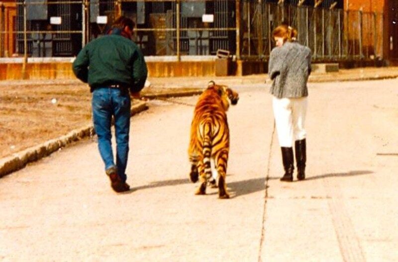 Тигрица Саша. Из личного архива Анны М. Элиас