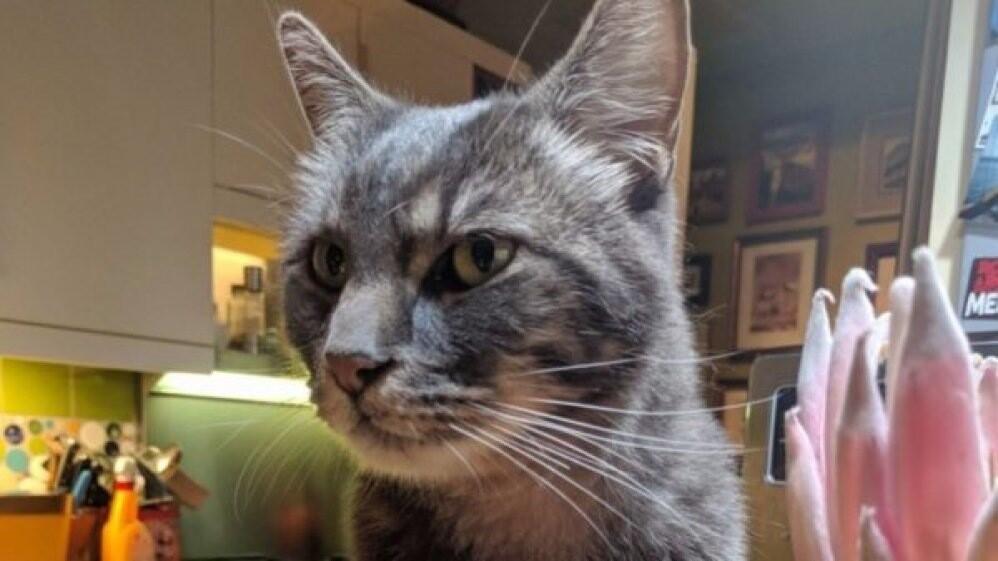 В США пропавший год назад кот нашёлся в 190 километрах от дома